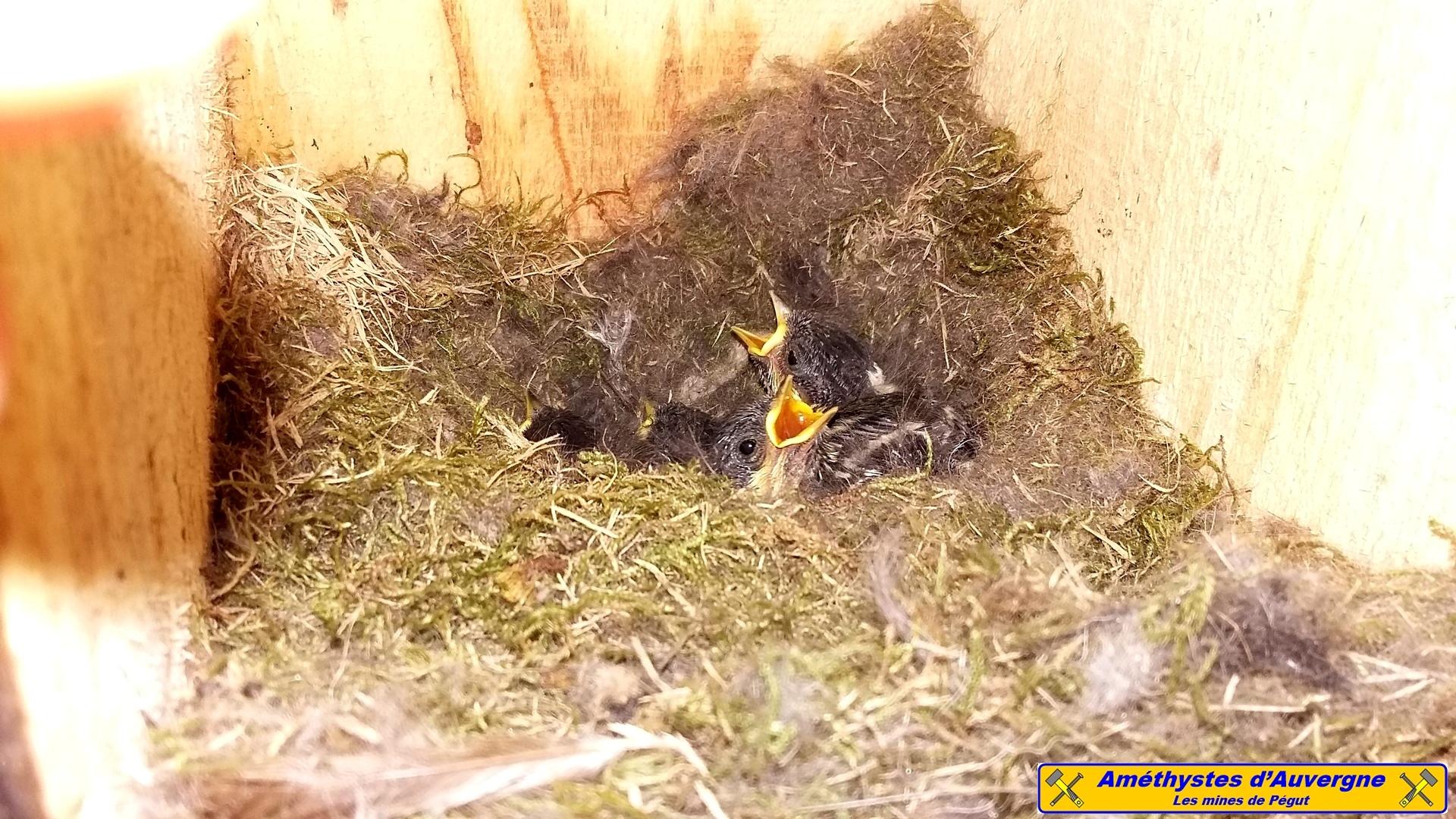 Bebes oiseaux 2016